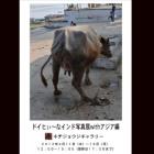 ドイヒぃ~なインド写真展withアジア編